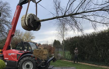 Moving a tree